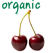 Organic fresh black sweet cherries